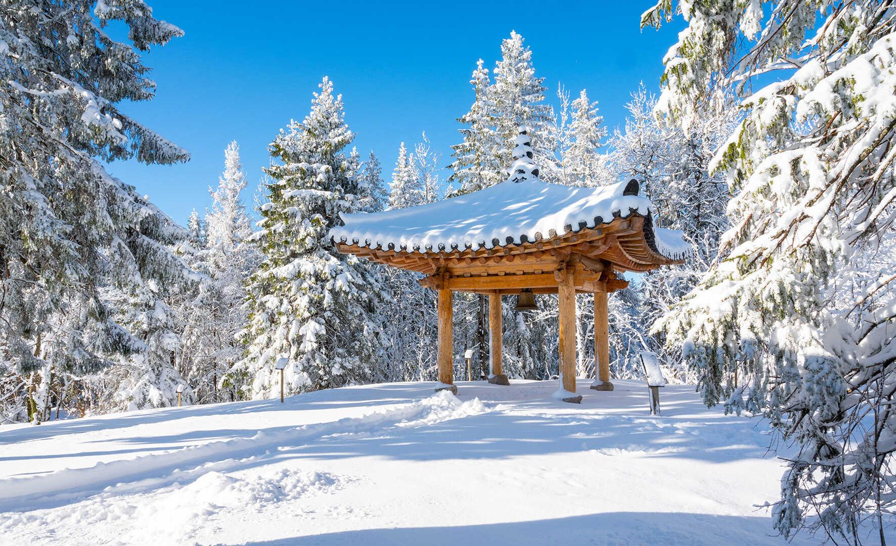 Naturområde ved Voksenåsen om vinteren